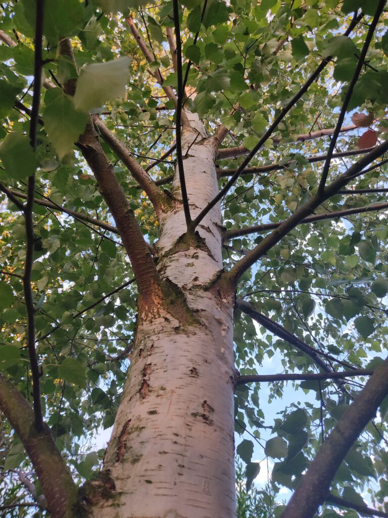 Baum-Team Baumpflege