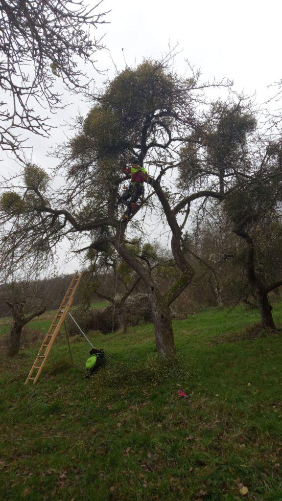 Obstbaum Baumpflege